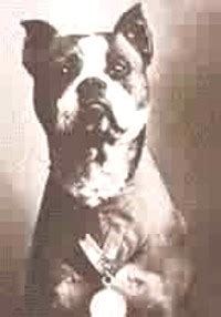 Is Sgt Stubby Real Digitaldog Thanks Dogs Past And Present