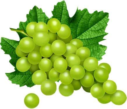 imagenes de uvas a color dibujos de uva para colorear e imprimir