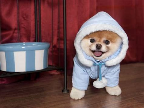boo the dog christmas world collection boo the world s cutest