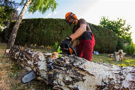 abattage arbre tarif