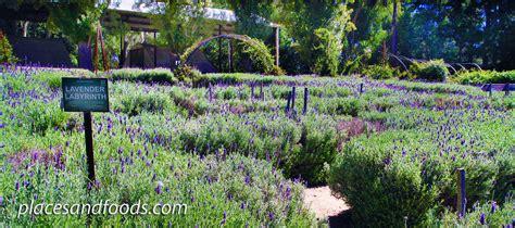 lavender maze ashcombe maze and lavender garden victoria