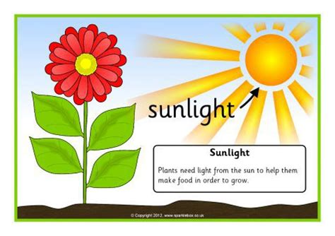 what of light do plants need sunlight plant clipart pixshark com images
