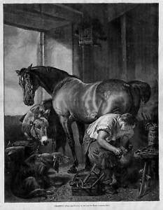SHOEING THE HORSE, DONKEY, DOG, HORSE GETTING NEW SHOES | eBay