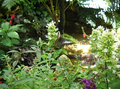 Gainesville Butterfly Garden by Family Vacation To Gainesville Florida It Forward