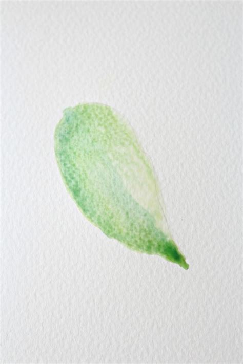 how to paint a basic leaf with water colors hobby lesson