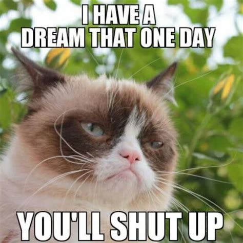 Fuck You Cat Meme - 25 very funny grumpy cat meme pictures and photos
