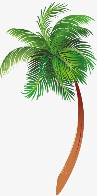 Dessin De Palmier Palmier Des Plantes Les Feuilles