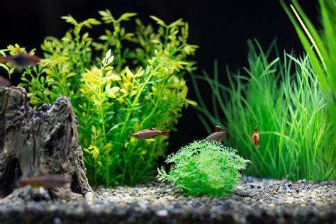stocking your aquarium evenly