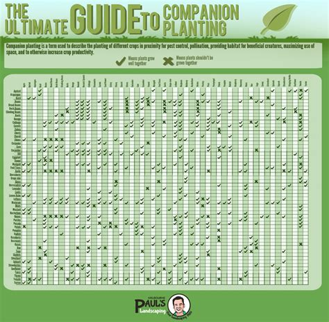 herb planting chart the ultimate guide to companion planting visual ly