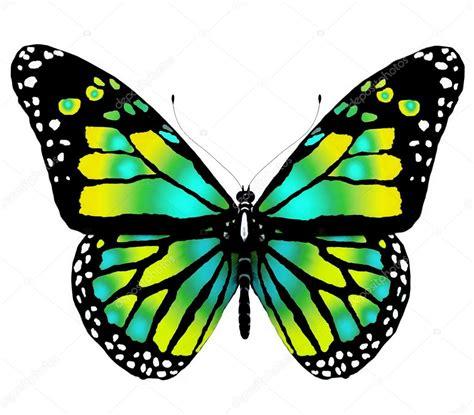 imagenes mariposas de colores brillantes papillon isol 233 de couleurs vives sur fond blanc