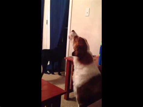 how to get your to howl how to get your to howl