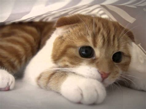 how to comfort a scared cat funny quotes about hoes emoji quotesgram