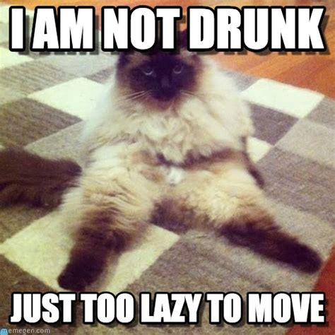 Lazy Cat Meme - lazy cat still cute lazy cat i am not drunk just too