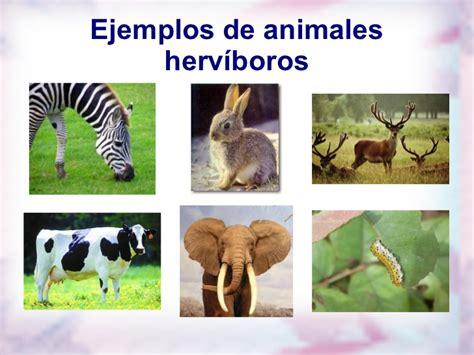 imagenes animales herbivoros carnivoros y omnivoros carnivoros herviboros omnivoros