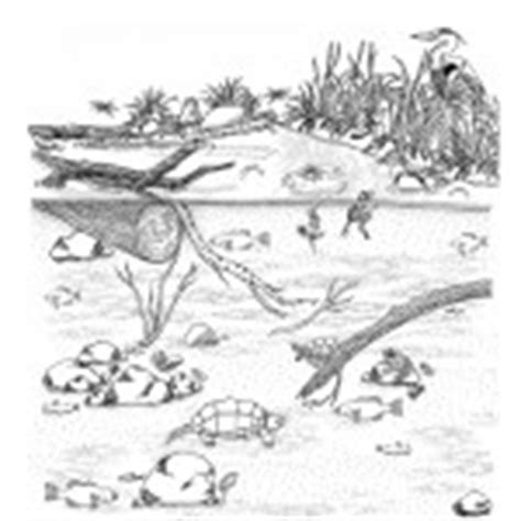 fish habitat coloring pages habitats biomes coloring nature