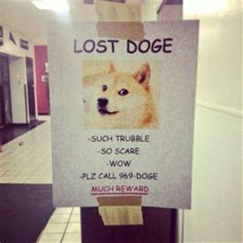 Lost Doge Meme - doge on pinterest doge doge meme and the den