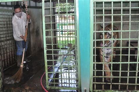 puasa daud satwa kebun binatang  wabah corona
