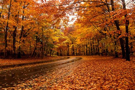 in fall the top 10 places to see fall foliage in toronto