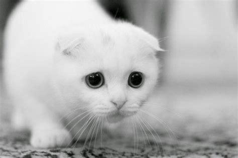 Kucing Anggora Cantik kumpulan gambar kucing lucu imut kumpulan gambar