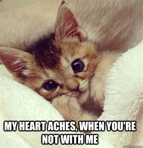 i love you cute kitten memes