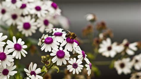 Permalink to Flower Hd Wallpaper Pinterest