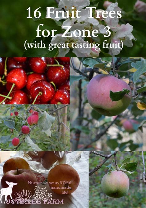 fruit trees for zone 4 16 fruit trees for zone 3 with great tasting fruit