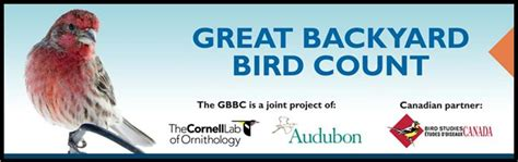 Cornell Great Backyard Bird Count by Get Ready For The Great Backyard Bird Count Bird