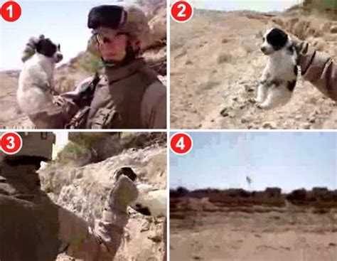 marine throws puppy hoax see posts 256 271 captures grinning u s marine throwing yelping puppy