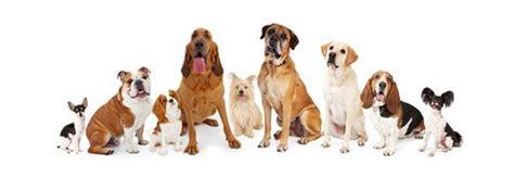 different races of dogs d 233 couverte des diff 233 rentes races de chiens de chasse