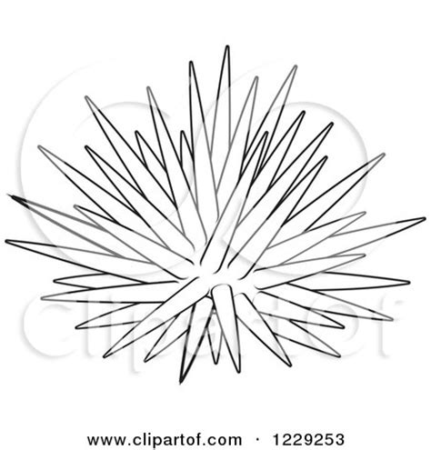 clipart of an outlined sea urchin royalty free vector