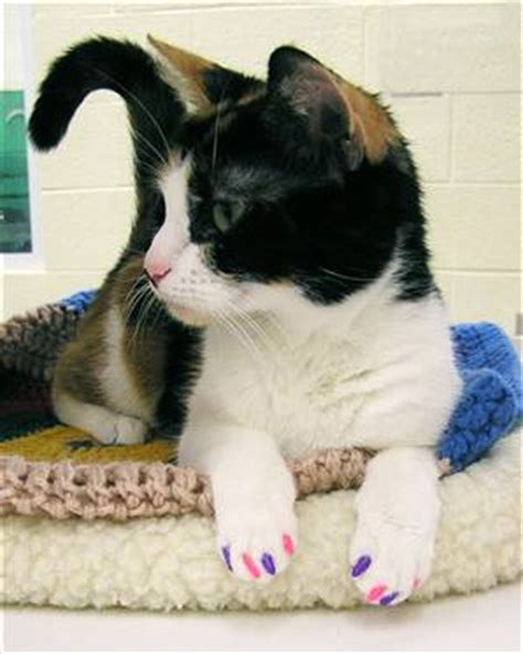 declawing dogs declawing cats is approved by majority of pet owners veterinary secrets with dr