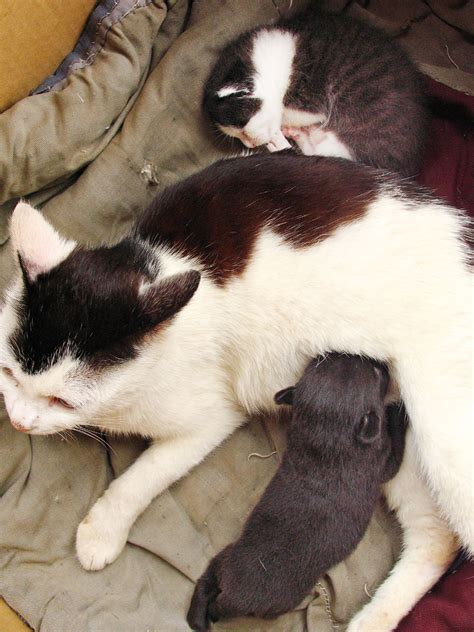 puppies giving birth giving birth to cat www imgkid the image kid has it