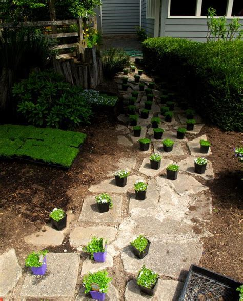 perfect ground covers for walkways garden walls the mercury news