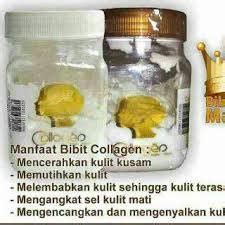 Bibit Collagen Asli Bpom cara membedakan bibit collagen asli dan palsu 081542076404