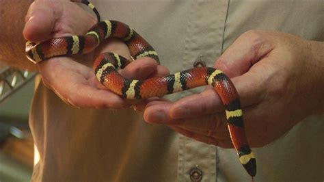 Garden Snakes Eat What Does A Ring Necked Snake Look Like Ehow