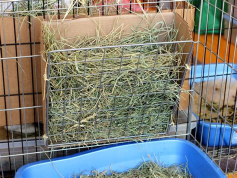 How To Make A Hay Rack by Diy Hay Rack Coding With Bunnies