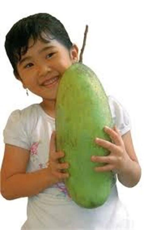 Bibit Mangga Manalagi Probolinggo bibit buah langka mangga mahatir