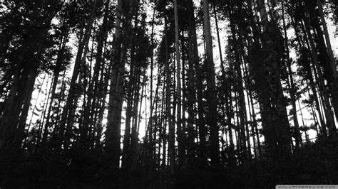 wallpaper black and white trees black and white trees wallpaper 889146