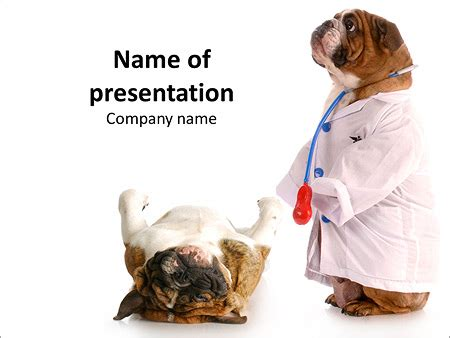 powerpoint templates for veterinarians dulldog in veterinarian costume powerpoint template