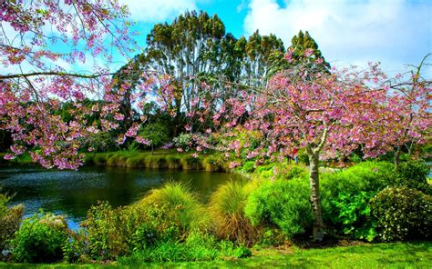 wallpaper abyss spring park in springtime full hd wallpaper and background image