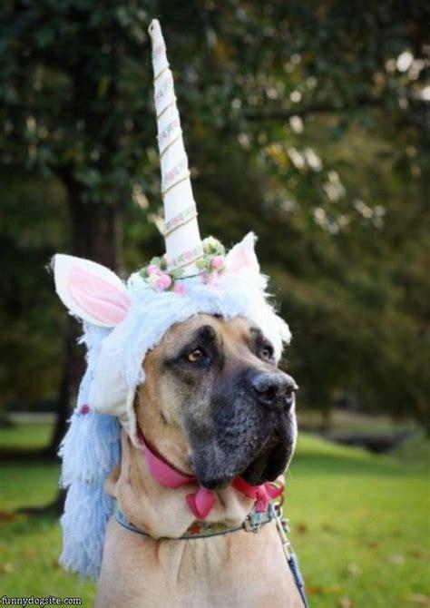 unicorn puppy unicorn funnydogsite