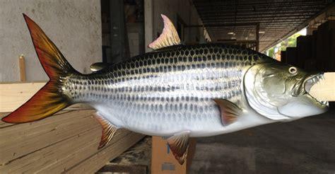 do sailfish boats have wood in them hawaii marlin fishing tigerfish