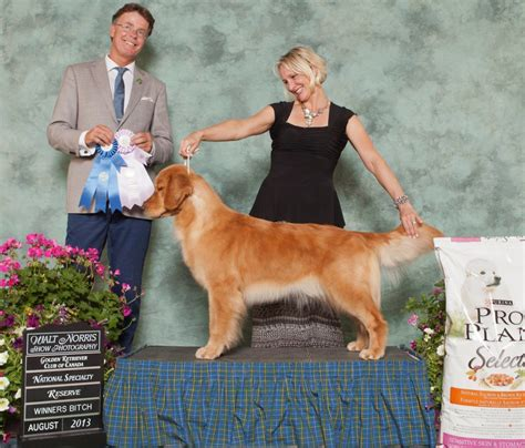 golden retriever national specialty 2016 golden retriever club canada national specialty