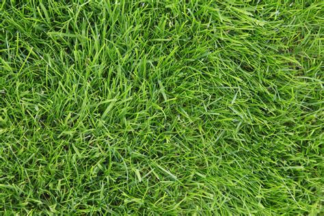 the 6 best types of grass to plant in your cincinnati lawn