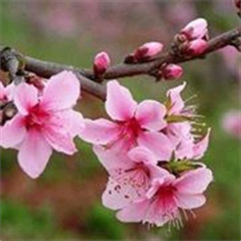 foto fiori pin dwg ville villette progetto autocad gratis schiera