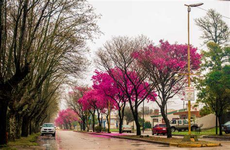 imagenes bellas de lluvia los lapachos de nuestro pueblo y la lluvia nos regalan
