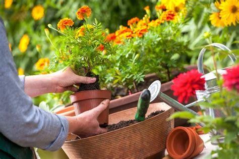 wann garten bepflanzen balkon bepflanzen und sich 252 ber einen pr 228 chtigen garten freuen