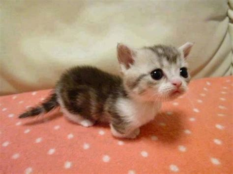 tiny kitten pictures photos and images for facebook