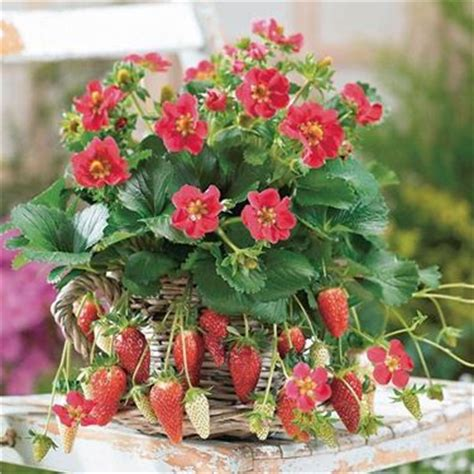 fiori per un amica fiori dell amicizia significato fiori