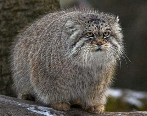 most adorable animals the 15 most fluffy and cute animals in the world blazepress